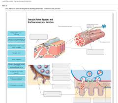 anatomy and physiology archive september 18 2017 chegg com