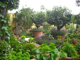 33 best garden fruit growing images on pinterest fruit fruit