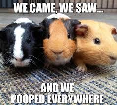 Funny Poop Memes - funny poop memes 10