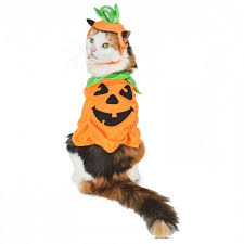 first class cats in halloween costumes