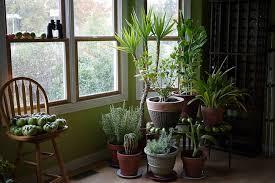 purifier l air d une chambre des plantes dépolluantes pour purifier l air de la maison