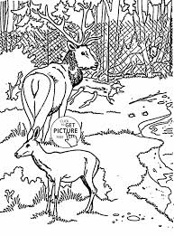 free coloring pages of birds animal coloring pages deers coloring page for kids animal pages