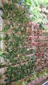 Vertical Garden Adalah - pt harapan nusa pratama jual taman vertikal cipanas