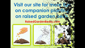 Companion Gardening Layout by The Best Tips For Raised Bed Gardening With Companion Plants Youtube