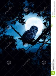 owl watches intently illuminated by full moon on h royalty free