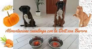 alimentazione casalinga gatto alimentazione casalinga cani e gatti clinicaveterinariasantanna