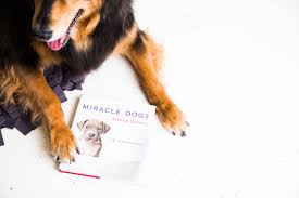 dog coffee table books the ultimate list of coffee table books for dog lovers everywhere