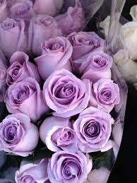 lavender roses bits pieces slices of pinteres