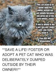 Funny Kitten Memes - 25 best memes about cute kitten cute kitten memes