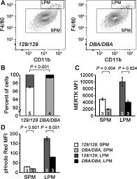 Sqrt 261 Dba 2j Haplotype On Distal Chromosome 2 Reduces Mertk Expression