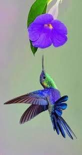 Hummingbird Flowers 75 Best Hummingbirds Images On Pinterest Humming Birds