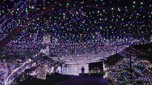 Firefly Laser Outdoor Lights by Christmas Christmas Light Projector Incredible Image