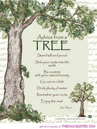 advice from a tree quotes sayings pictures jpg the daily quotes