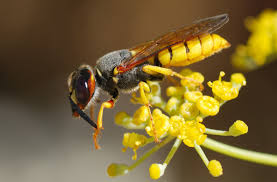 um today how to deal with wasps in your backyard