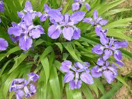 free images growth flower purple floral bouquet