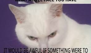 White Cat Meme - persian cat meme funny daily funny memes