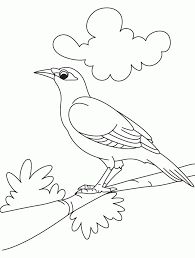 cute bird coloring pages coloring