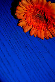 the orange and blue home appliances decoration find this pin and more on my bedroom orange and blue