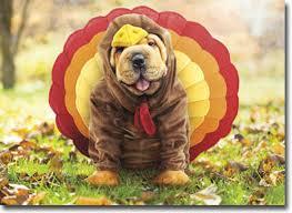 turkey shar pei thanksgiving card greeting card by