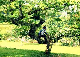 free images tree nature people farm meadow play flower
