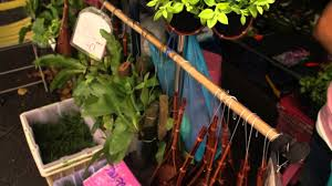 small hanging plants for sale at the bangkok weekend market