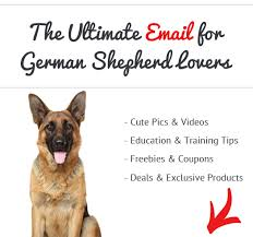 German Shepherd Christmas Yard Decorations by Pros And Cons Of German Shepherds See What Real German Shepherd