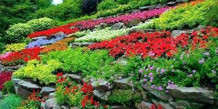 Creating A Rock Garden Terraced Rock Garden Pictures Creating A Rock Garden Design
