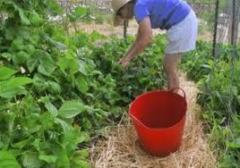 community garden grows in bellevue pittsburgh post gazette