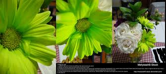 Lime Green Flowers - lime green flower arrangement stock by melyssah6 stock on deviantart