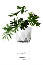 easy indoor plants the philodendron is another easy indoor plant much the same as