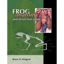 frog anatomy and dissection guide carolina com