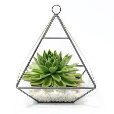 succulent kits geometric pyramid glass vase succulent terrarium by dingading