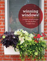 Low Maintenance Windows Decor Low Maintenance Windows Decor With City Gardening Low