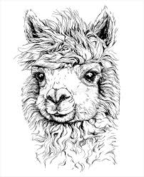 realistic sketch of lama alpaca black and white drawing isolated