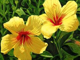 Yellow Hibiscus Flowers - top 15 beautiful yellow flowers in the world discover more ideas