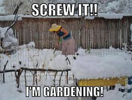 Funny Snow Meme - screw it i m gardening in the snow meme wtf feb 19 2015 04 48
