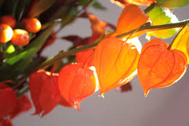 lantern flower lantern flower arrangement lantern flower