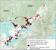 northern map species at risk registry cosewic assessment and status