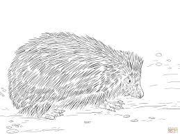 hedgehog coloring pages terrific brmcdigitaldownloads com