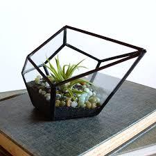 best 25 glass terrarium ideas ideas on pinterest terrarium