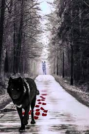 the black and white wolf photomanipulation by laluna19 on deviantart