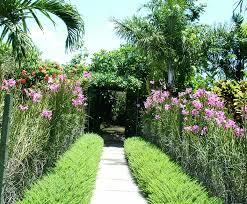 backyard tropical backyard plants