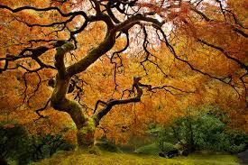 fall tree checklist heath tree service