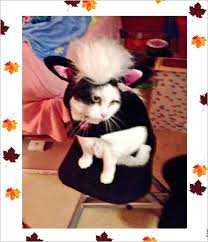 Skunk Halloween Costumes Merovence Family Pet Halloween Fashion Show