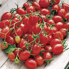 fantastico hybrid tomato seeds from park seed