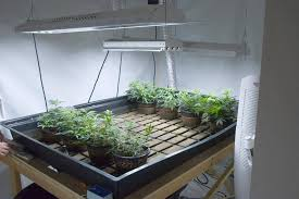 top tips for keeping your marijuana grow room clean