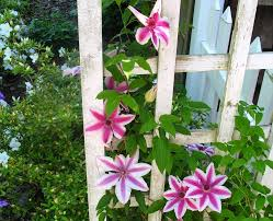 garden trellis flowers climb u2013 outdoor decorations