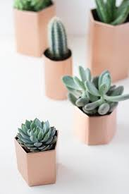 where can i buy cactus and succulents updated 2017