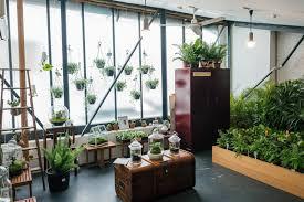 cactus ice cream party indoor plant sale melbourne