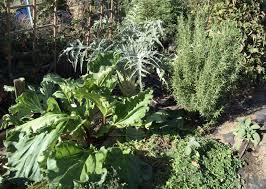 winter garden in southern california mink hollow farm
